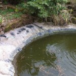 Repaired koi pond