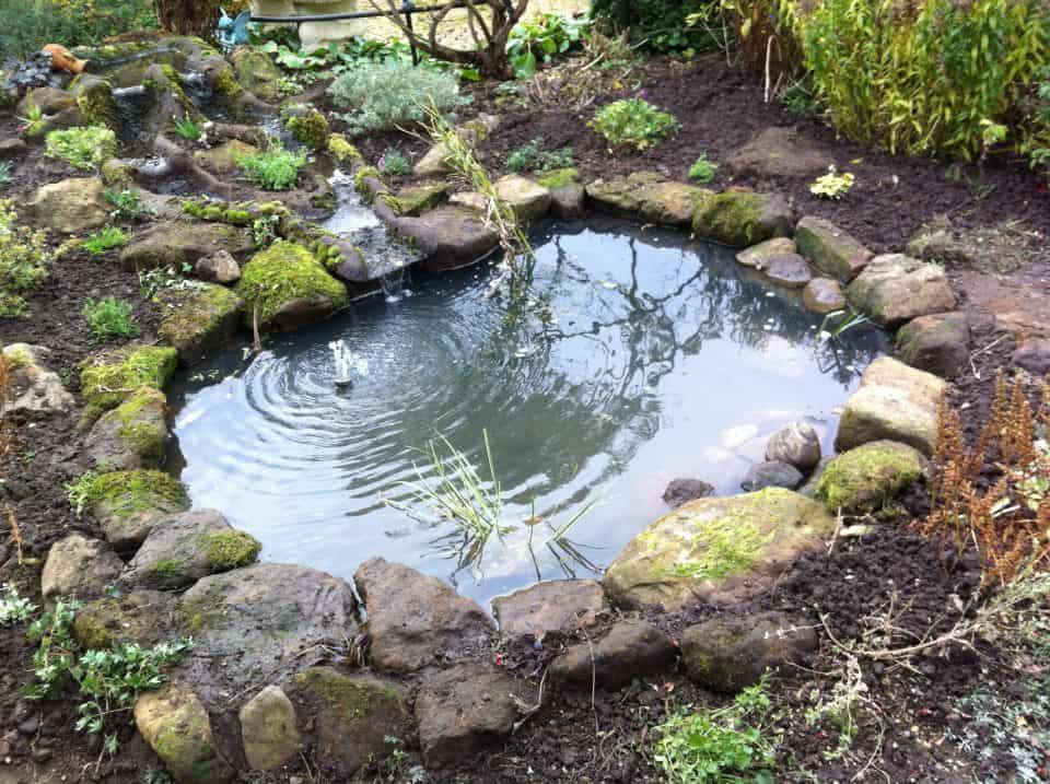 Gallery pond works for Pond edging ideas