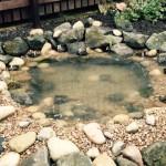 Wildlife_pond