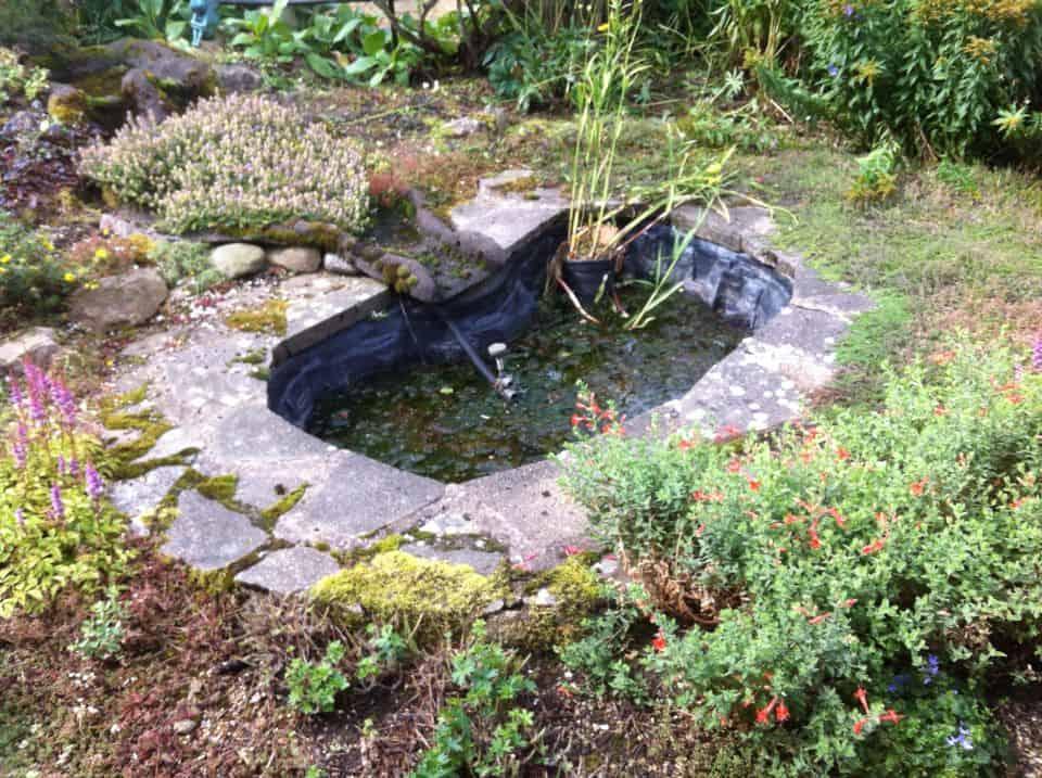 Preformed fish ponds bing images for Wildlife pond design uk