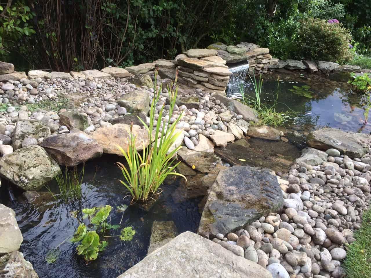 Gallery pond works for Pond stream design