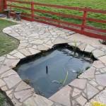 New fish pond
