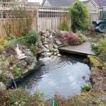 Pond after cleaning